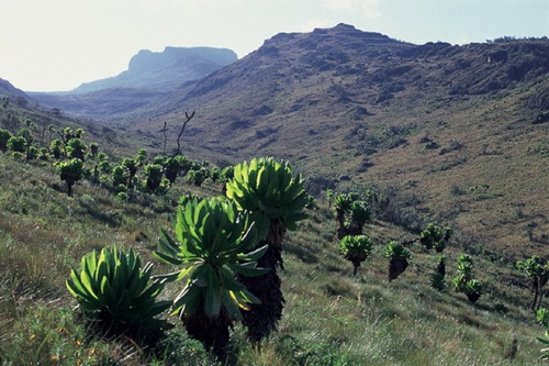 Aberdare National Park  Popular National Parks in Kenya