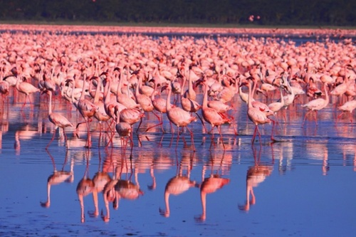 Lake Nakuru National Park Popular National Parks in Kenya