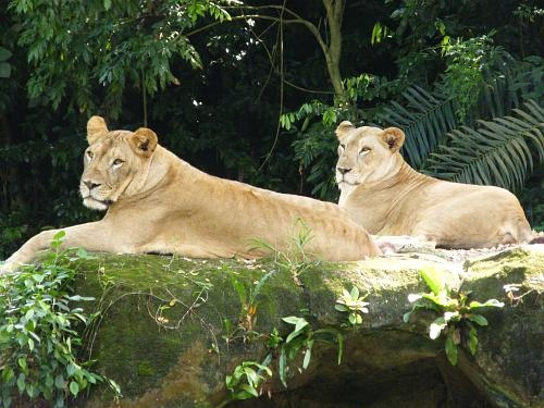 Singapore Zoo Inviting Places in Singapore