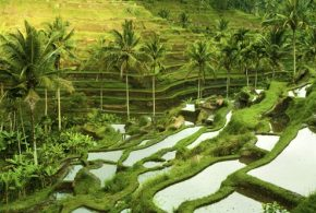 Beautiful Places in Indonesia - Ubud, Komodo Island and Sumatra