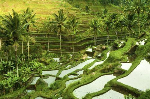 Ubud Beautiful Places in Indonesia