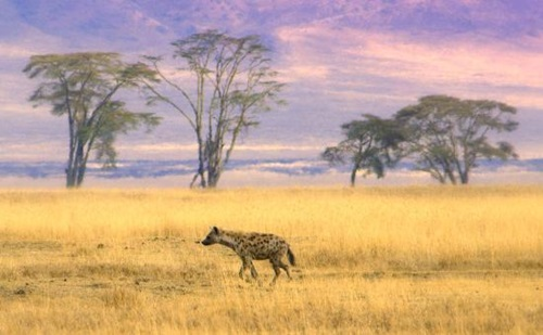 Top Beautiful Destinations in Africa  Ngoronoro Conservation Area – Tanzania