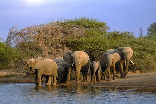 World National Parks  Kruger National Park