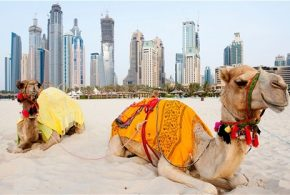 The Amazing Culture and Traditions of the Locals of Dubai
