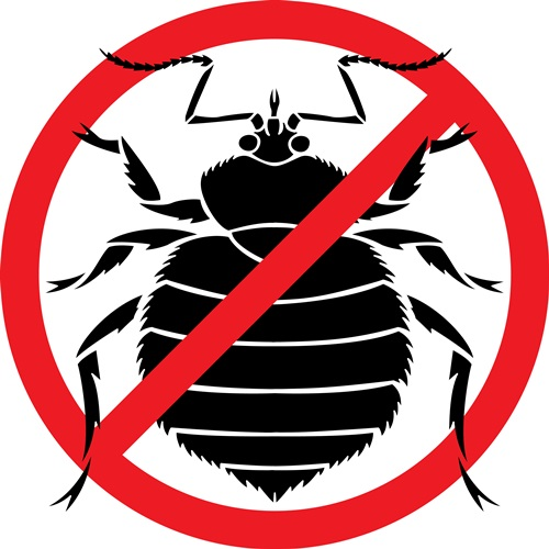 Tips to Avoid Bed Bugs