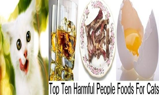 Top Ten Harmful People Foods For Cats