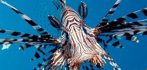 Top Ten Most Beautiful Fishes In The Sea