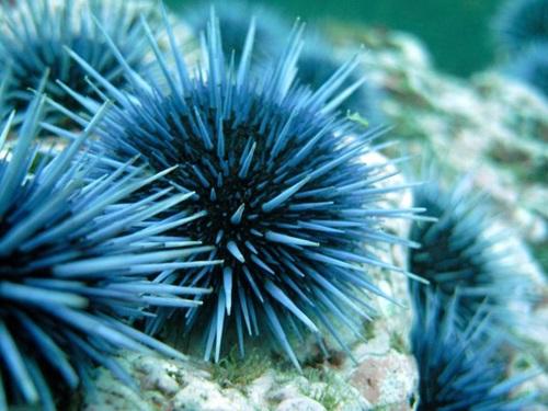 Top Ten Smallest Creatures On Earth