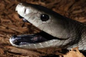 World's Top Ten Most Poisonous Snakes