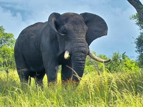 Слава Богу! - Страница 5 Top-Ten-Biggest-Animals-In-The-World-9