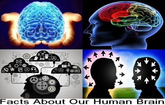 Top Ten Interesting Facts About Our Human Brain