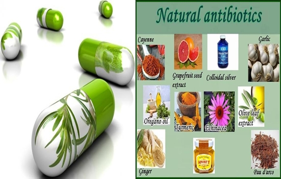 Top Ten Most Powerful Natural Antibiotics