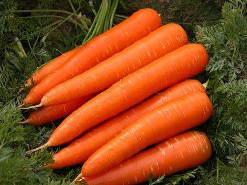 Seven Easiest Vegetables To Grow In Your Garden