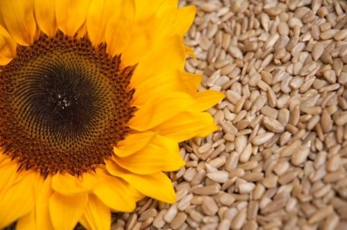 Six Health Benefits Of Sunflower Seeds