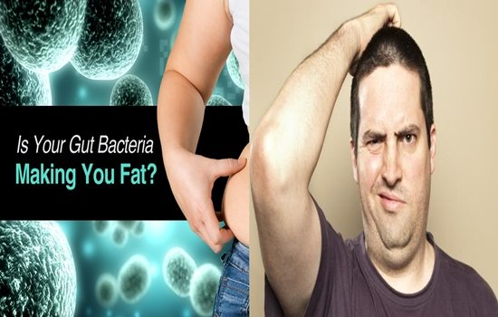 gut bacteria can influence our weight