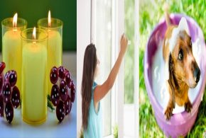 Eight Tips To Make Your Home Smell Sweet