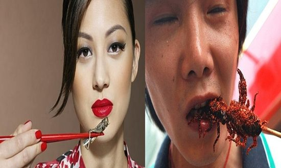 Nutritious Insects Consider Diet
