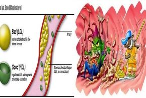 Find Out How Cholesterol Is Actually Good For You