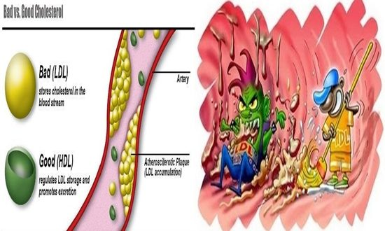 How Cholesterol Is Actually Good For You