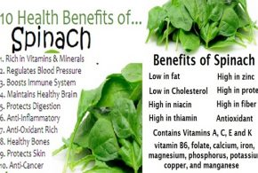 Spinach - Astonishing Facts You Didn't Know about Spinach