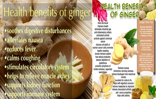 KNOW THE HEALTH BENEFITS OF GINGER