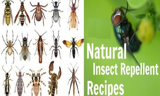 Easy and Natural Repellent Recipes You Can Make At Home