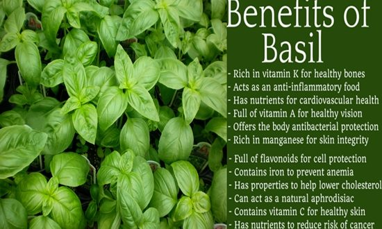 HEALTH BENEFITS OF BASIL