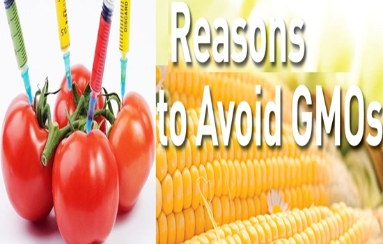 Should Not Consume Genetically Modified Organisms Foods