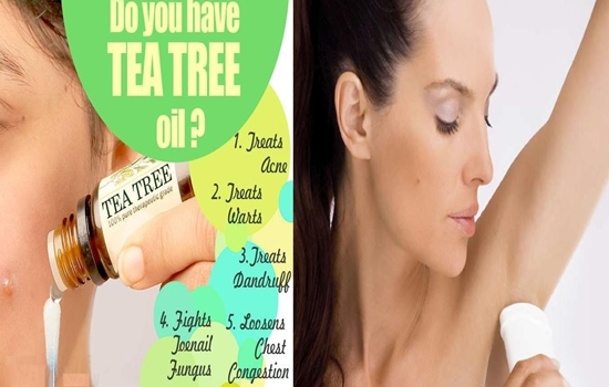 Tea Tree Oil for Your Health and Beauty