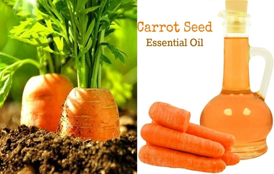 benefits of carrot seed essential oil, the great yet unknown secret of health and beauty