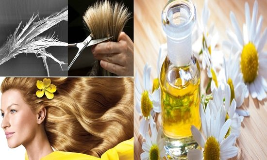 benefits of chamomile oil for hair