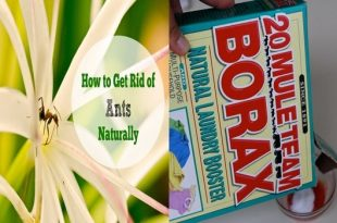 Get Rid Of Ants Permanently With This Natural Trick