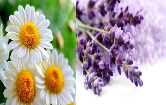 Improve Your Mood with These 6 Amazing Scents