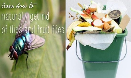 Tips Will Make Your House Fruit Fly-free