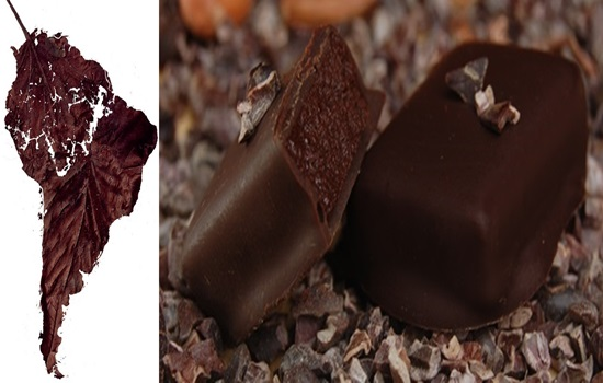Interesting Facts About Chocolate You Didn't Know About