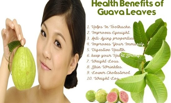 Miraculous Medical Uses For Guava Leaves You Didn't Know About
