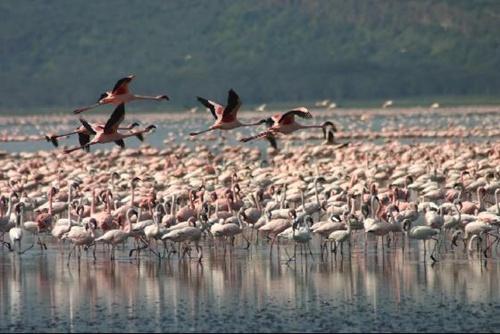 Lake Nakuru National Park Popular National Parks in Kenya