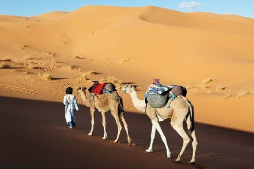 Explore Morocco and Embrace the Exotic  Desert Safaris
