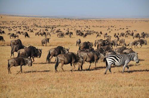 Places To See In kenya Masai Mara National Reserve