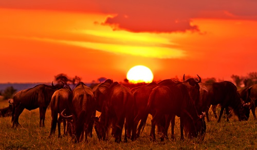 Places To See In kenya  Masai Mara National Reserve