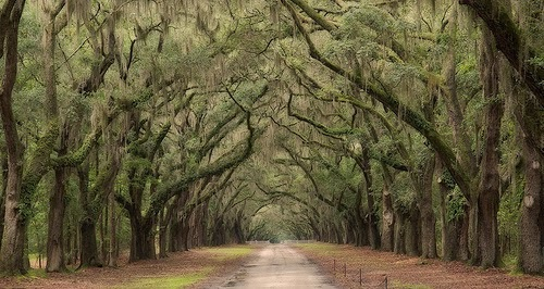 Photo of Savannah Georgia – America's Most Haunted City