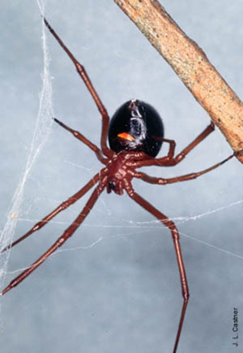 Top 10 facts you did not know about spiders