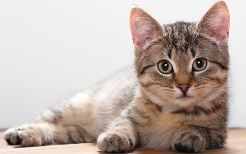 Top Ten Smartest Animals In The World