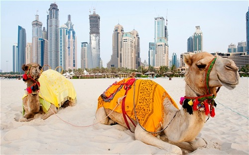 Photo of The Amazing Culture and Traditions of the Locals of Dubai