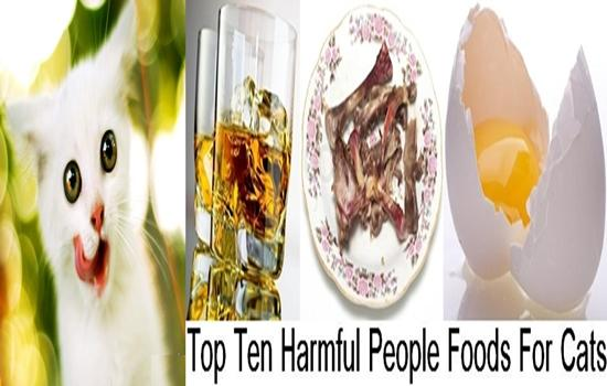Photo of Top Ten Harmful People Foods For Cats