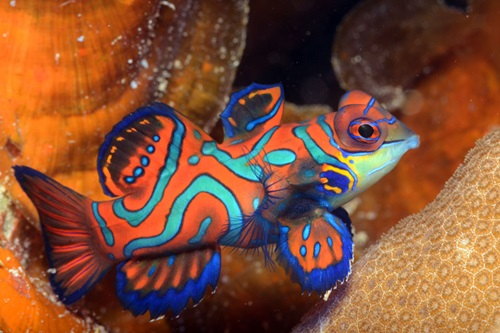 Photo of Top Ten Most Beautiful Fishes In The Sea