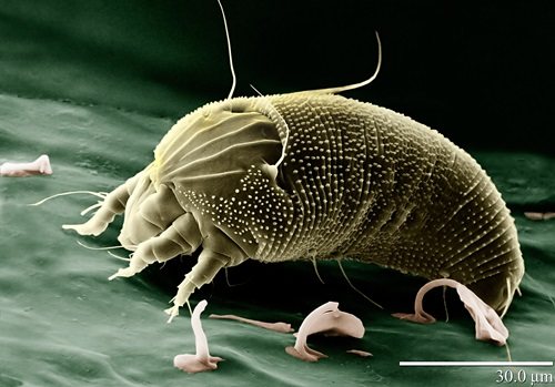 Top Ten Smallest Creatures On Earth