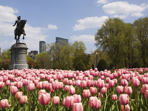 Photo of Wonderful Educational and Entertaining Places to Visit in Boston