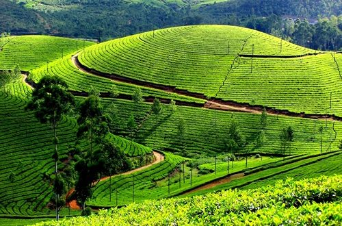 Wonderful Tourist Destinations in Munnar