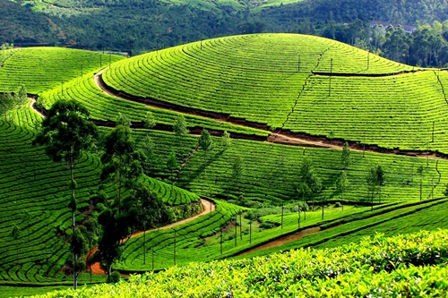 Photo of Exciting an Amusing Tourist Destinations in Munnar